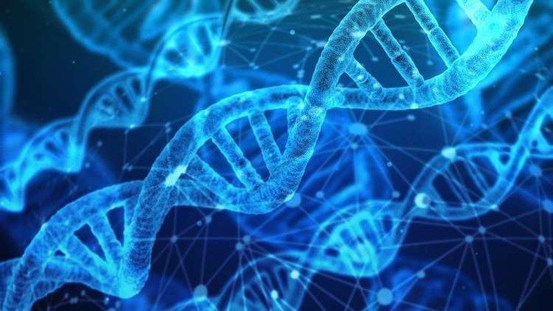 """""""مفتاح الحمض النووي"""" سيمكن البشر من تجديد أطرافهم المفقودة مستقبل"""