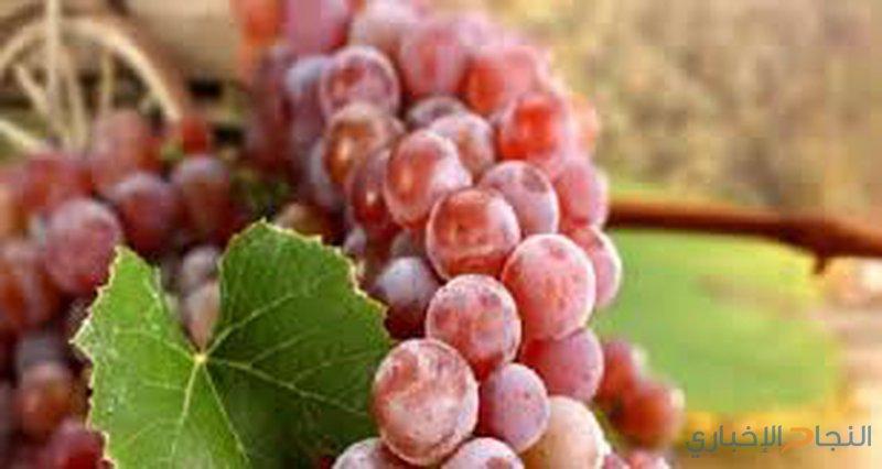 تعرفوا على أهم فوائد العنب الأحمر