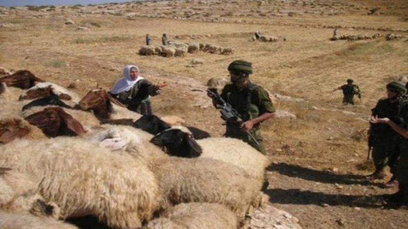 قوات الاحتلال تحتجز رعاة أغنام وناشطين في الأغوار