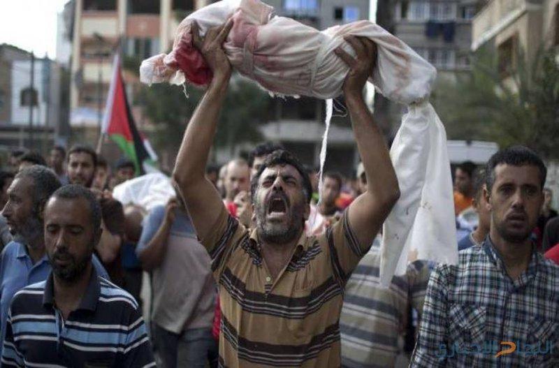 في غزة...طيور الجنة تحت القصف الإسرائيلي