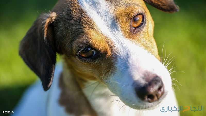"""مافيا ايطالية ترصد مكافأة مالية """"لاغتيال"""" كلب"""