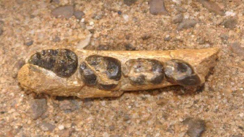 العثور على بقايا أقدم قردة عاشت على سطح الأرض
