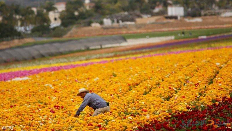 أستراليا تسهل شروط  الفيزا للمزارعين