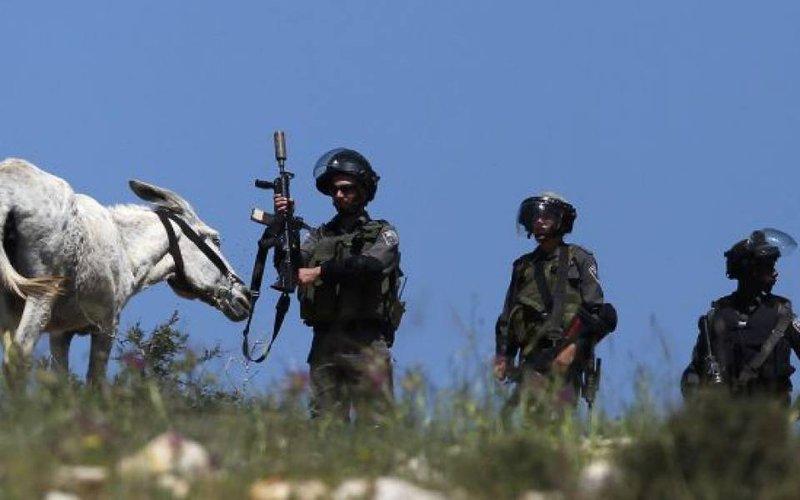 قوات الاحتلال تستولي على حمارين في الأغوار الشمالية