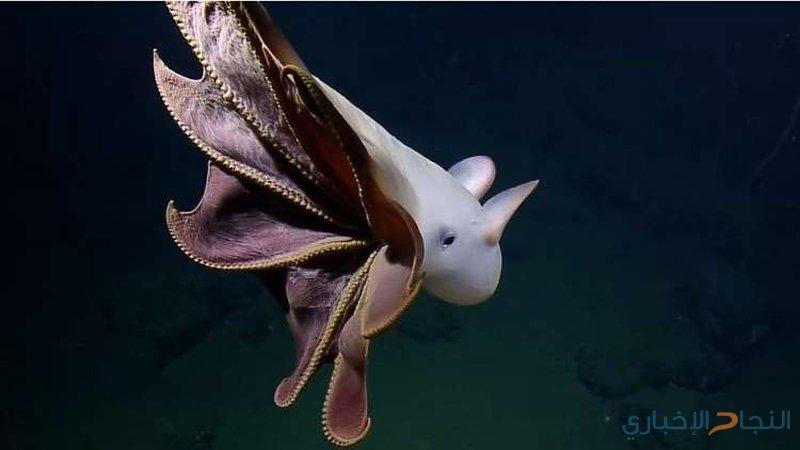 تصوير أخطبوط نادر في أعماق المحيط! (فيديو)