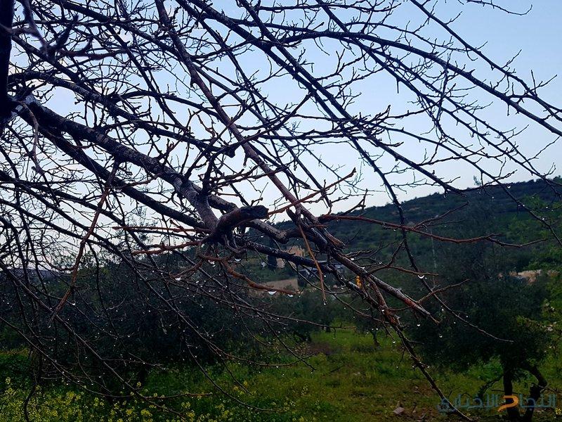 """حالة الطقس: أمطار مصحوبة بعواصف رعدية في سعد السعود """"صور"""""""