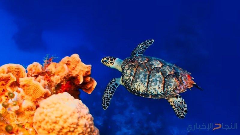 تناقص الكائنات البرية والبحرية بنسبة 60% في 40 عا