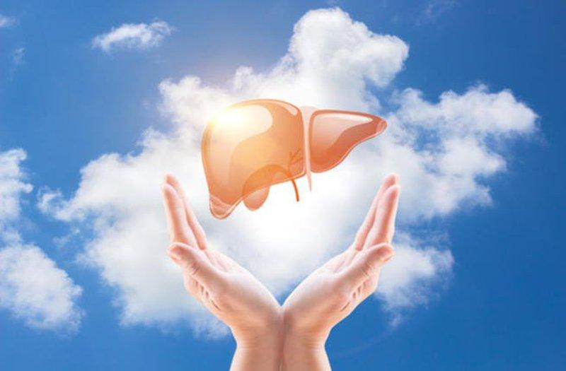 دراسة : الدم يملك مفتاح تجديد خلايا الكبد