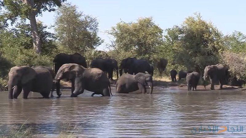تطوير تقنية لمراقبة الفيلة عبر الاهتزازات