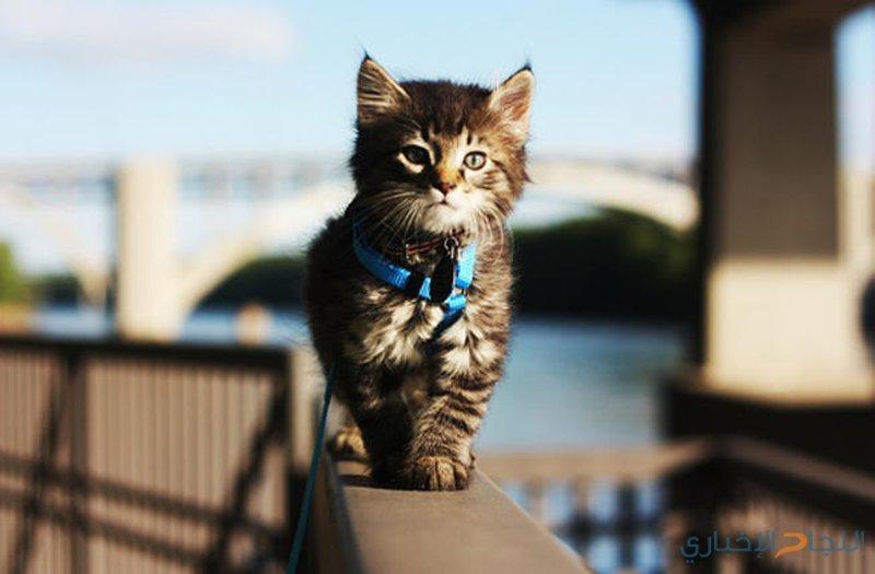 قطة تقتحم ممشى عرض أزياء في تركيا