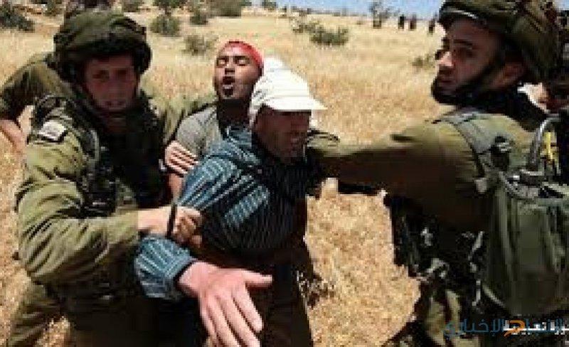 الاحتلال يطارد الرعاة في الأغوار ويعتقل أحدهم