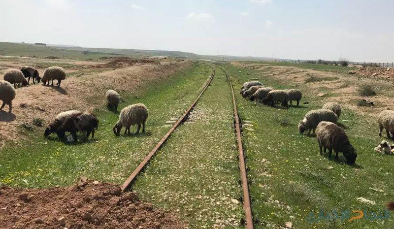 قطار السلام... سكة حديدة لربط تل أبيب بسلطنة عمان